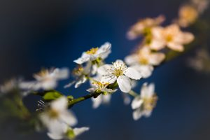 branch of a flowering tree