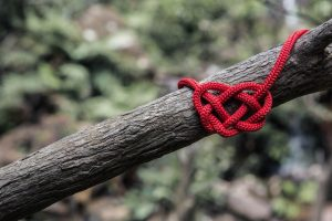 red rope tied in a know hanging from branch
